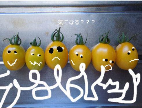 黄色トマトステッカー悩み.jpg